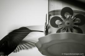 Série: Havia um beija-flor em meu jardim // Fotos e edição por Felipe Arruda (viajandonaviaje.com)