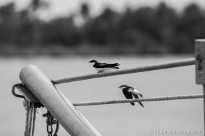Série: Meu nordeste brasileiro // Fotos: Felipe Arruda (viajandonaviaje.com)