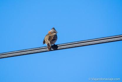 Serie: Aves de la Patagonia // Fotos y edición: Felipe Arruda (viajandonaviaje.com)