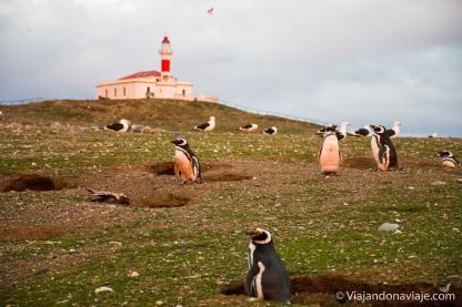 """Serie fotografica: Patagonia Adventures 2016-17 (Pinguino de Magallanes en Isla Magdalena - Chile) // Fotos y edición: Felipe """"Pipo"""" (viajandonaviaje.com)"""