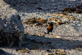 """Serie: Aves de Patagonia // Foto y edición: Felipe """"Pipo"""" (viajandonaviaje.com)"""