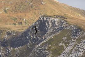 Serie: WildPatagonia - Cape Horn // Fotos & Edición: Felipe Arruda (viajandonaviaje.com)