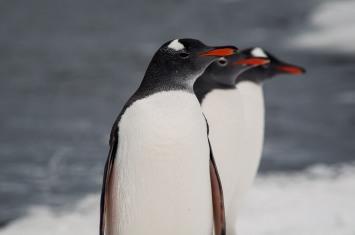"""Serie: Aves de Southamerica & Antarctic ©ViajandoNaViaje 2017 // Fotos y Edición: Felipe """"Pipo"""""""