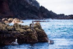 """Serie: Galapagos Experience 2017 // Fotos y Edición: Felipe """"Pipo"""" (viajandonaviaje.com) // Santa Fe Island"""