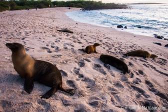 """Serie: Galapagos Experience 2017 // Fotos y Edición: Felipe """"Pipo"""" (viajandonaviaje.com) // Leones Marinos de Galapagos"""