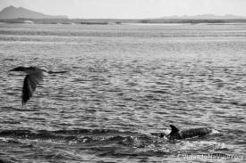 """Serie: Galapagos Experience 2017 // Fotos y Edición: Felipe """"Pipo"""" (viajandonaviaje.com) // Leon Dormido, San Cristobal Island"""