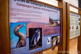 """Serie: Galápagos Experience ©ViajandoNaViaje 2017 // Fotos y Edición: Felipe """"Pipo"""" // Charles Darwin Scientific Station"""