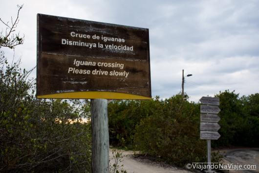 """Serie: Galápagos Experience ©ViajandoNaViaje 2017 // Fotos y Edición: Felipe """"Pipo"""""""