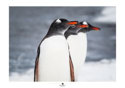 """INCOGNITA Antarctica Exposición Fotográfica: A partir del 31 de Julio en Punta Arenas - Chile // Fotos y Edición: @Felipe """"Pipo"""" Viajandonaviaje.com"""
