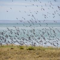 Birdwatching en Bahía Lomas (Tierra del Fuego)