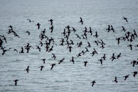 """""""Bahía Lomas en Tierra del Fuego"""" // Fotos y Edición: @Felipe """"Pipo"""" Viajandonaviaje.com"""